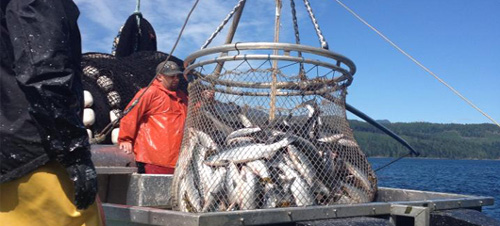 an analysis of the fishing industry of canada It looks like you've lost connection to our server please check your internet connection or reload this page.